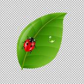 coccinella su foglia verde