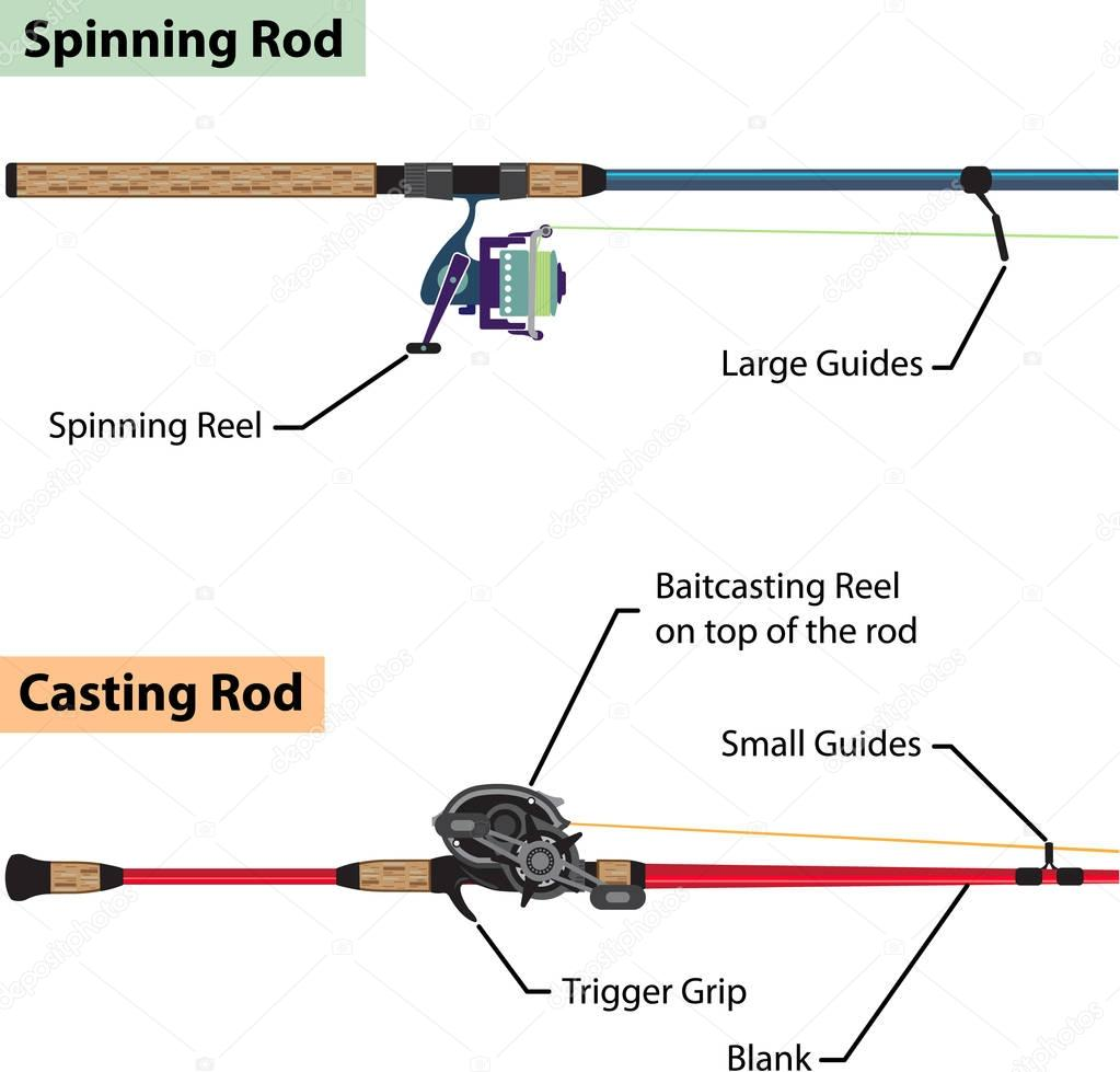Diagram Of Spinning Rod And Baitcasting Rod Vector