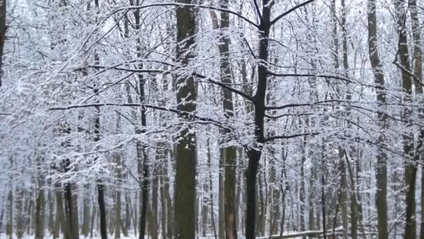 Les, ovocná ulička v oblačném jarním počasí pod posledním sněhem.