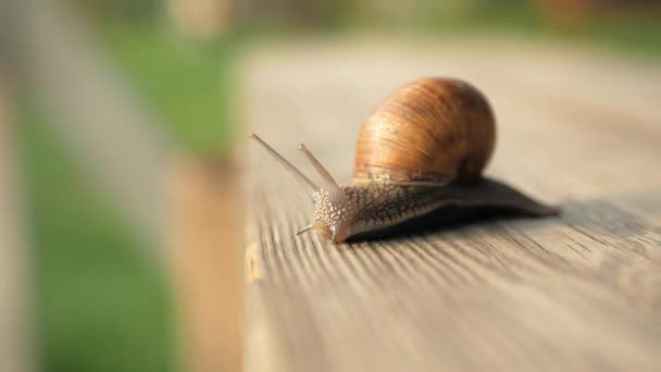 Sight, steps and slow motion into the abyss. Snails crawl on a gray board in sunny weather. Macro, super close up.