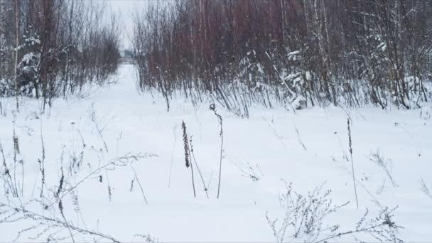 Zimní klidná krajina