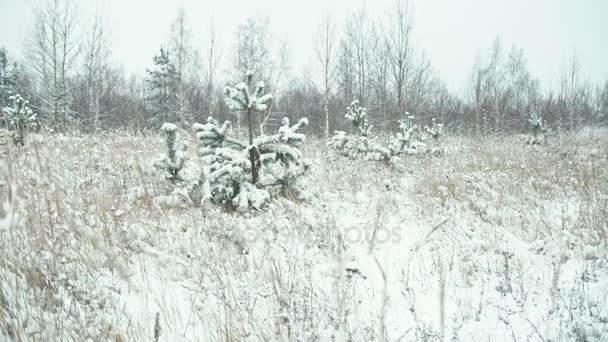 Zimní krajina v detailech