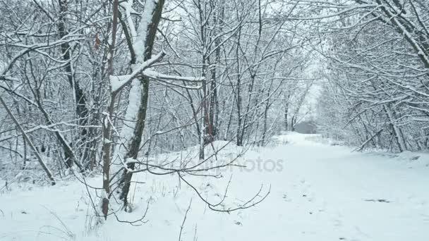 Cesta lesem zasněžené zimě po sněhu. Zaostření přechod.