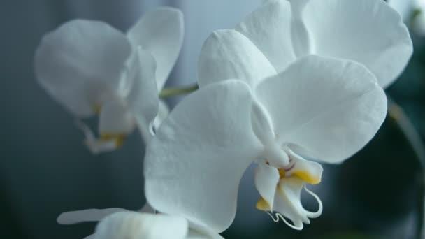 Fehér orchidea virág, függőleges panoráma, sekély mélység-ból mező. REC 709