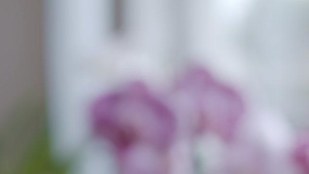 Orchideák közelében ablak fókusz átmenet, sekély mélysége mező