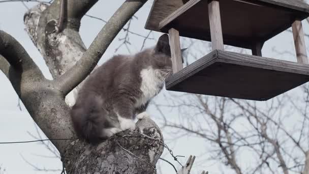 Macska bujkál a fán, lelövik lassított felvételen