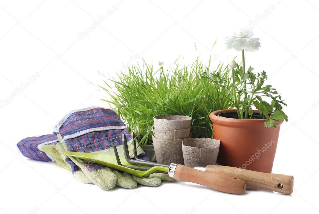 Plant with gardening tools on white background