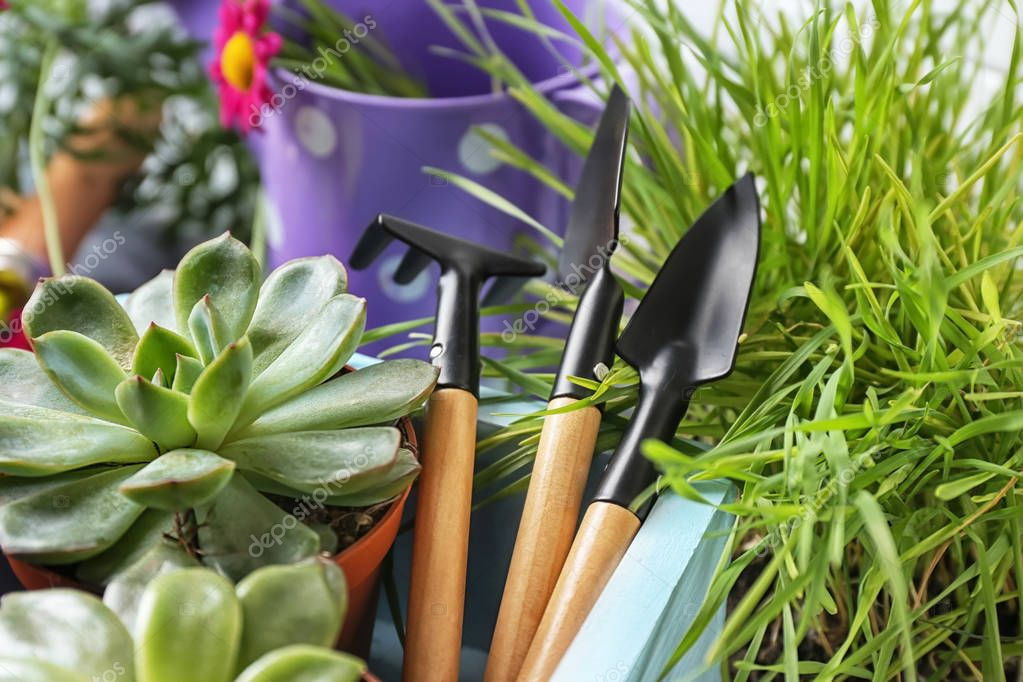 Pot plants and gardening tools, closeup