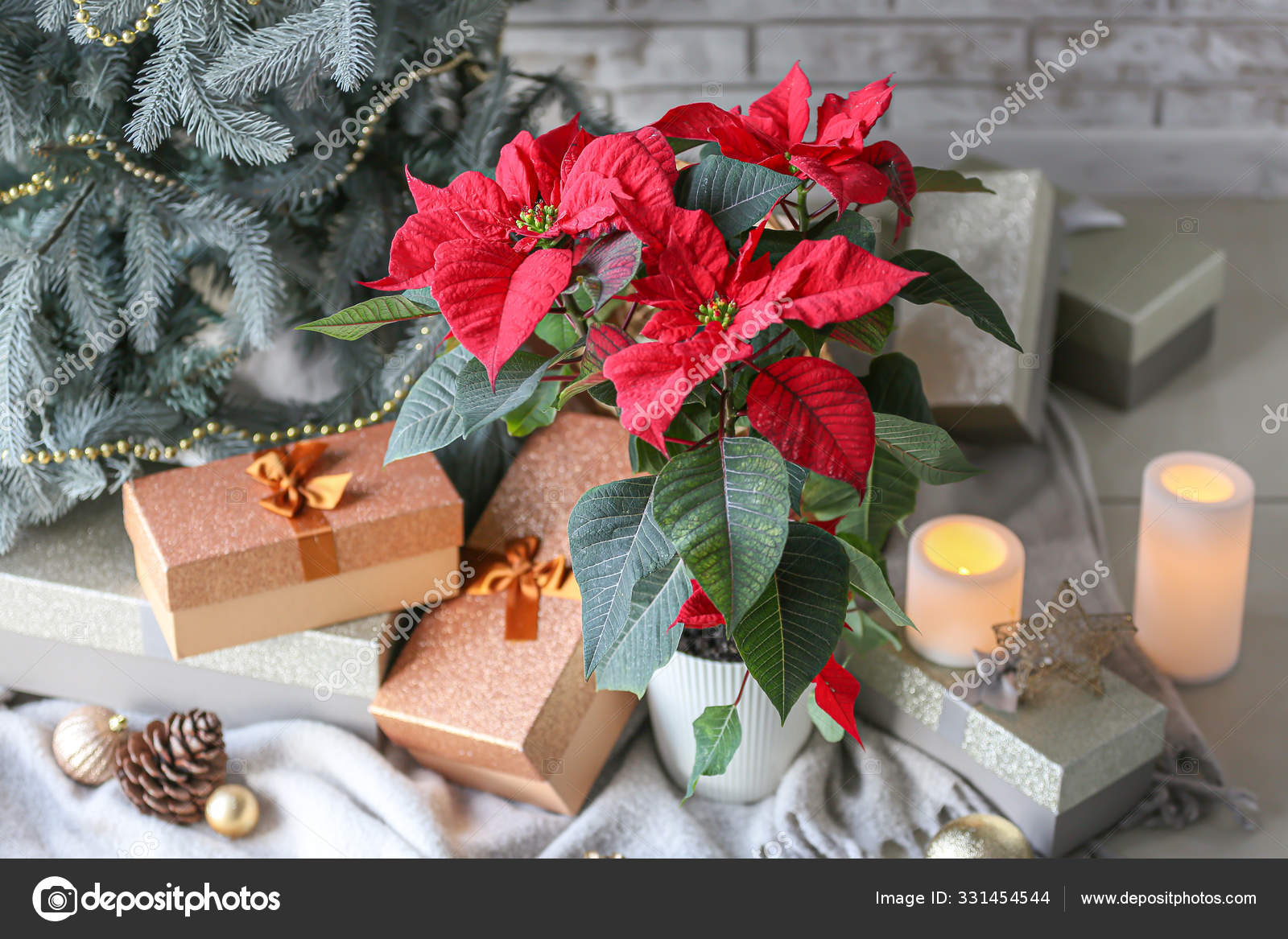 Plant poinsettia and gift boxes near