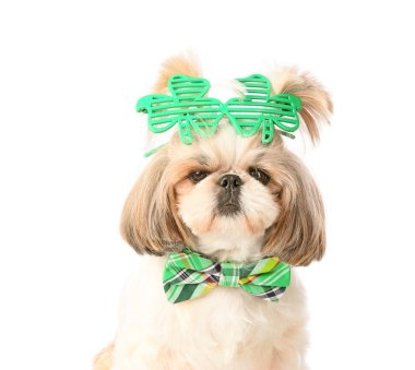 Cute dog on white background. St. Patrick's Day celebration