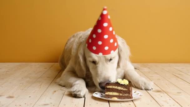 Aranyos kutya eszik Születésnapi torta színes háttér