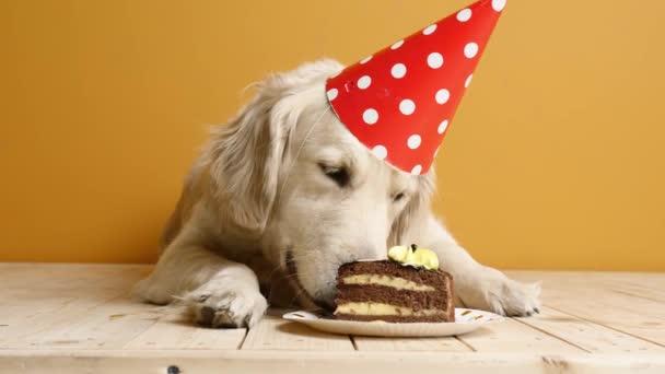 Netter Hund isst Geburtstagstorte auf farbigem Hintergrund