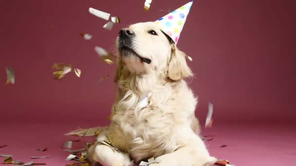 Cute dog in party hat and falling confetti on color background
