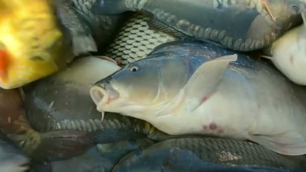 Průmysl pro chov sladkovodních ryb