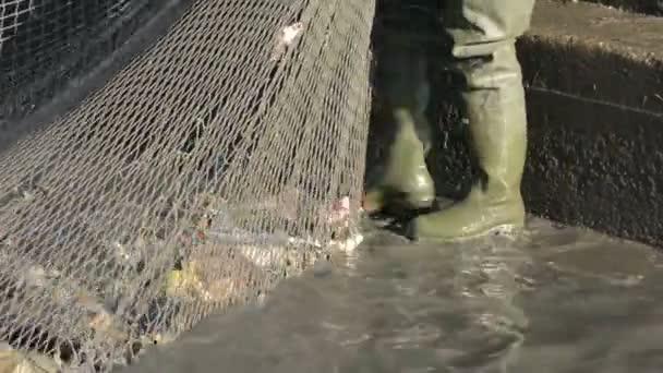 Rybář, sběr ryb na netu