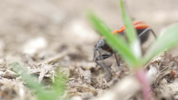 Red bug with ant