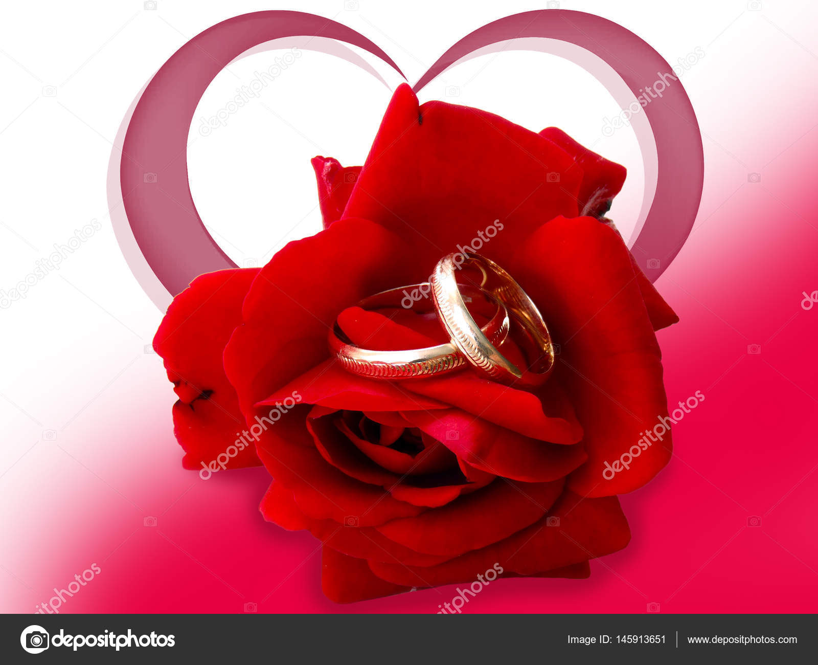 image of rose background rings download red golden on petals free royalty stock images wedding ring