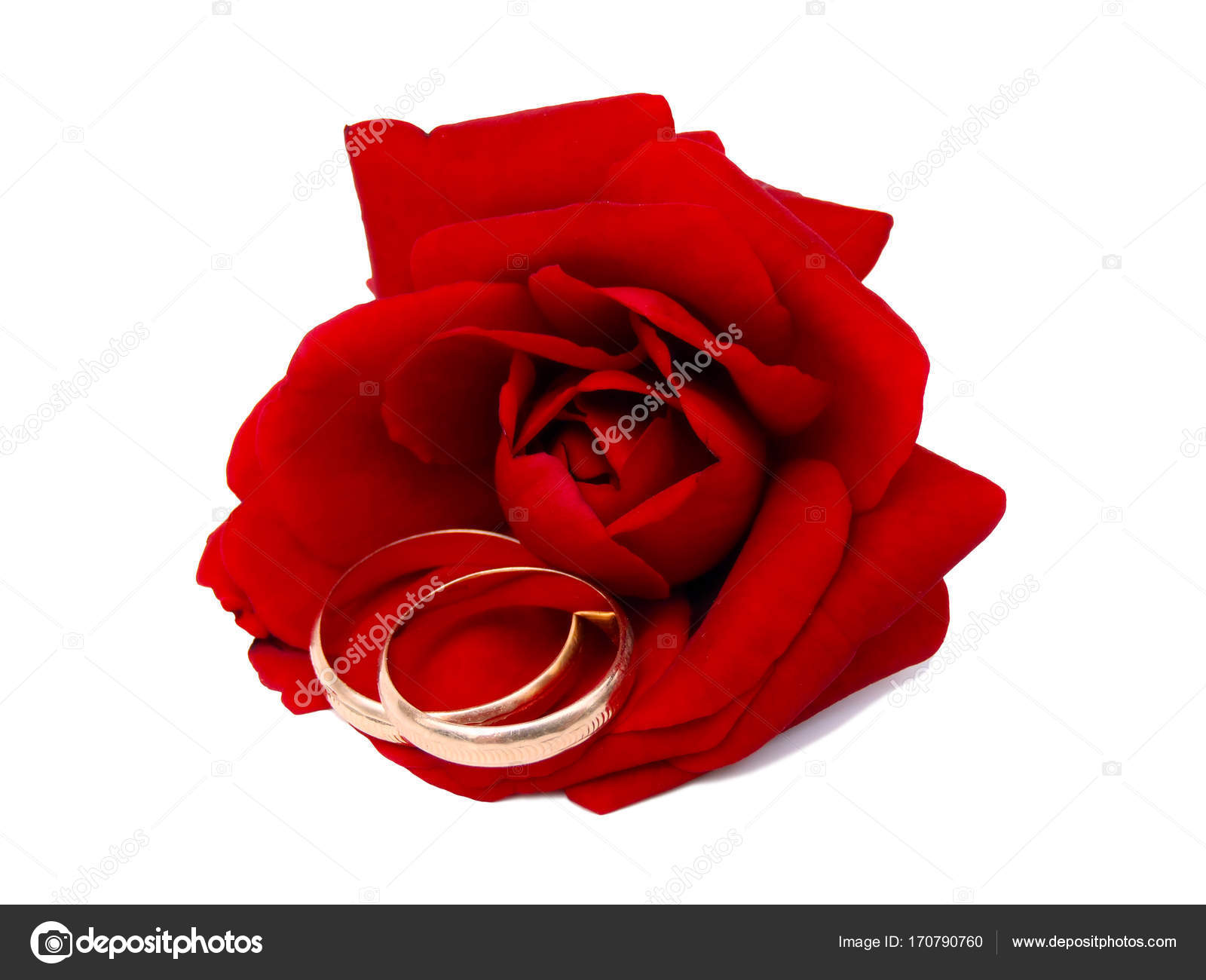 ring wedding with rings rose red and water myshoplah