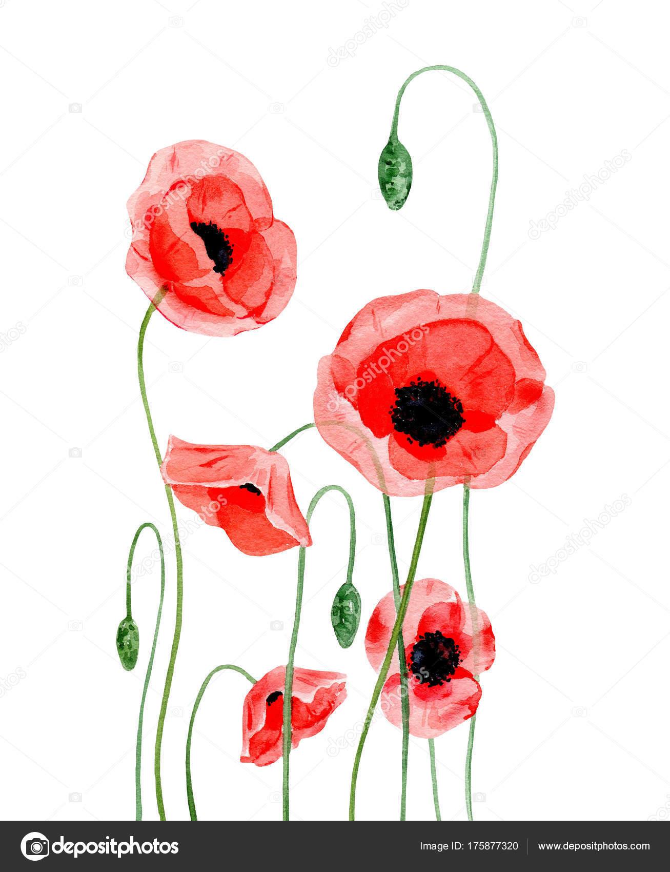 Aquarell Bild Von Hand Malen Rote Mohnblumen Stockfoto V