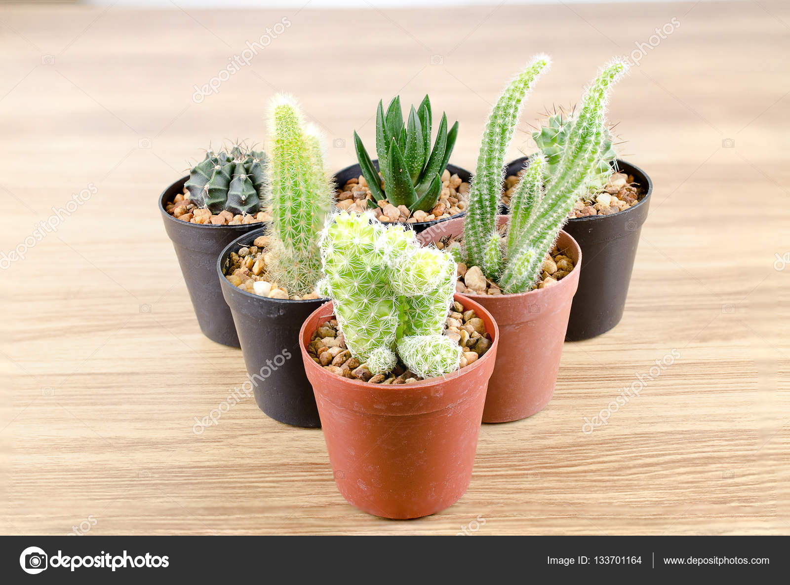 conjunto de pequeos cactus en macetas negras Foto de stock