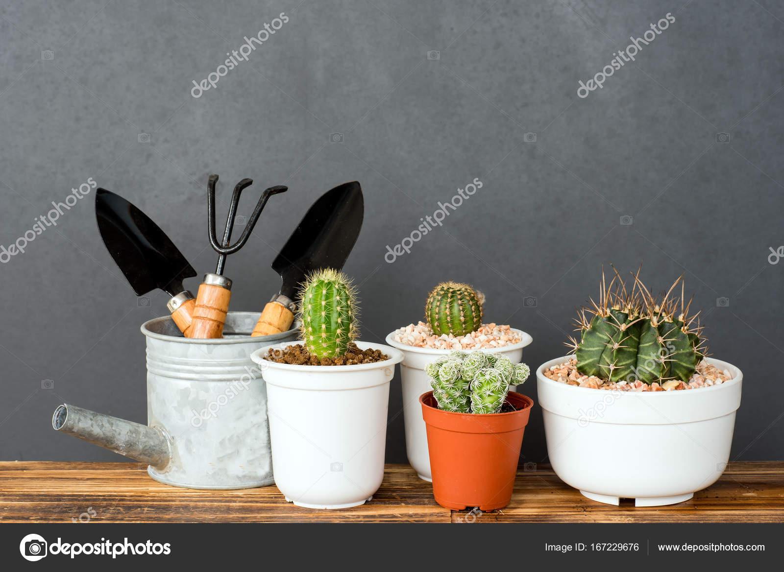 Jardin De Cactus Interieur Adorable Photographie Shirophoto