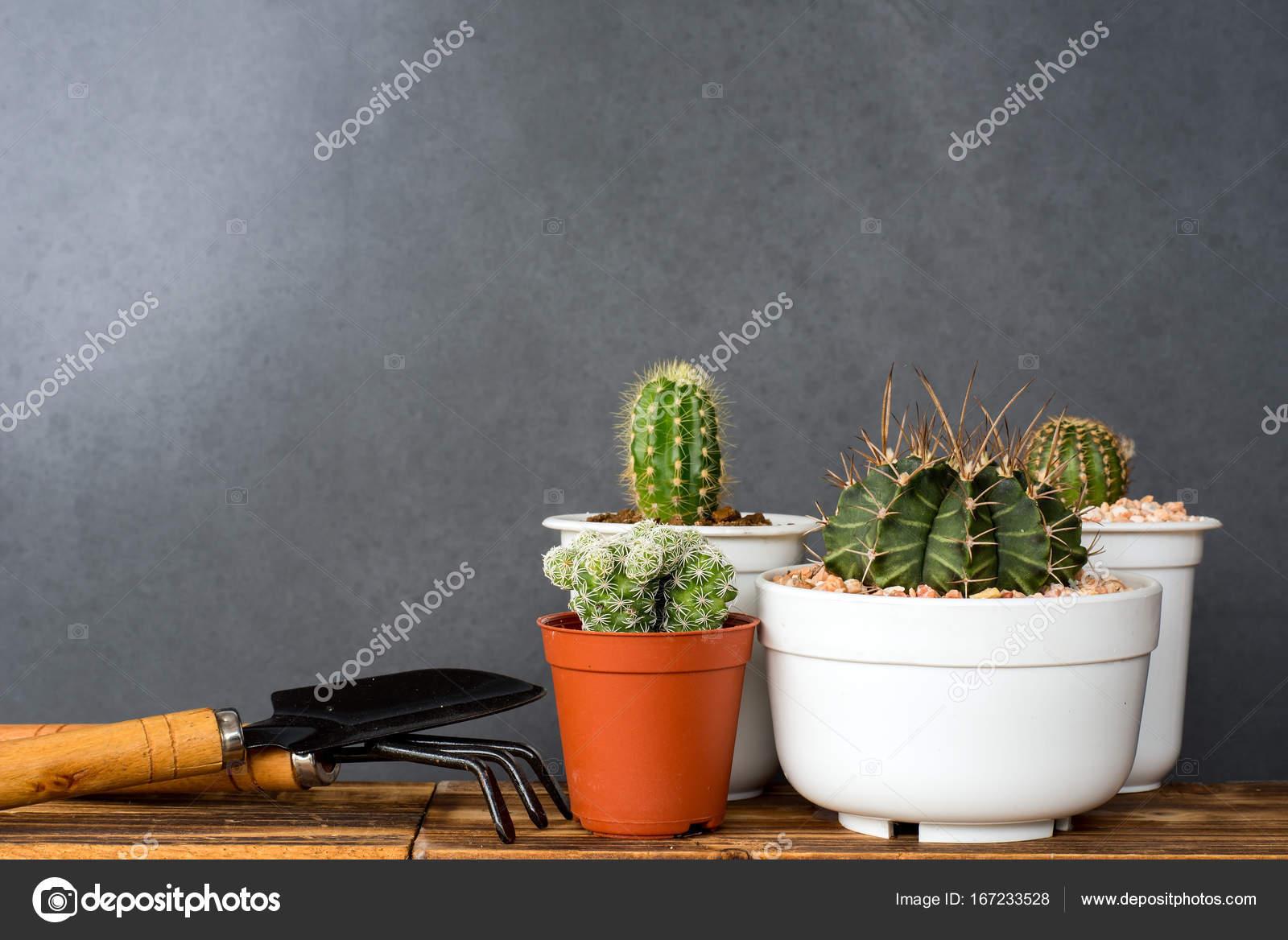 Indoor Cactus Garden Adorable indoor cactus garden stock photo shirophoto 167233528 adorable indoor cactus garden photo by shirophoto workwithnaturefo