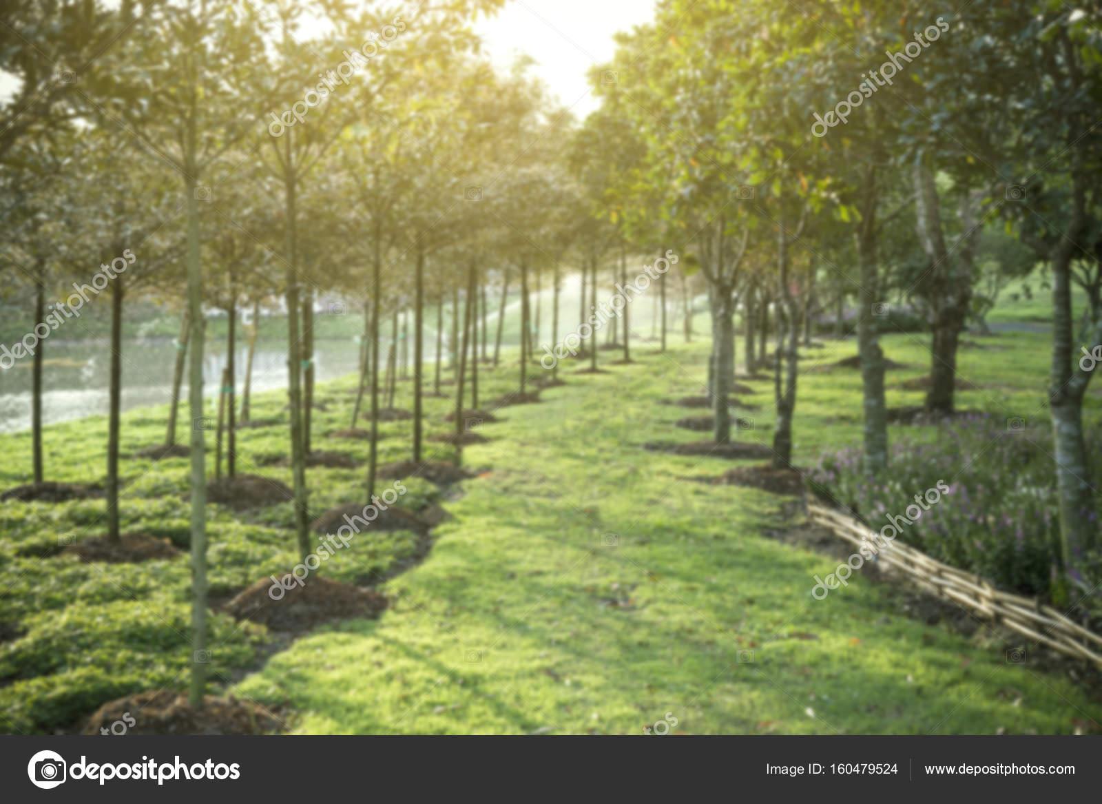 Unsch rfe hintergrund mit gr nen rasen weg weg stockfoto liewluck 160479524 for Dmv garden city idaho