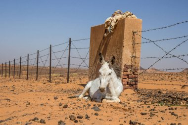 Donkey resting near Meroe pyramids.