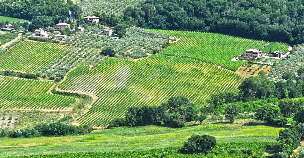 Vineyards near the city of Montepulciano, Tuscany, Italy