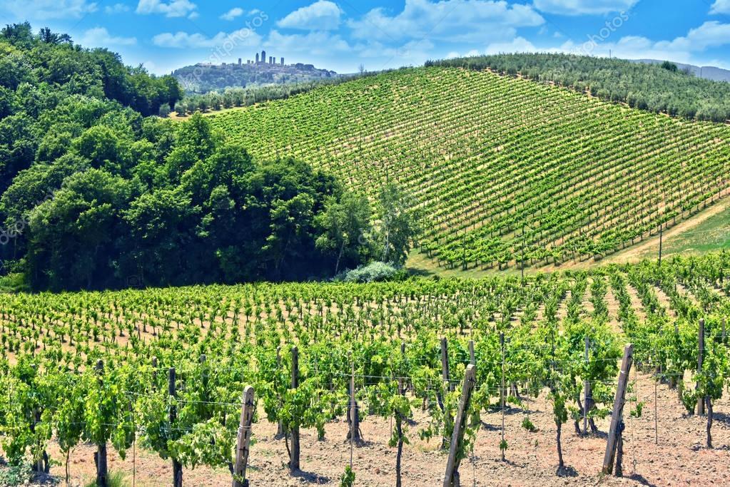Vineyards near the city of San Gimignano, Tuscany, Italy