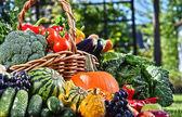 Čerstvé bio zeleniny a ovoce v zahradě