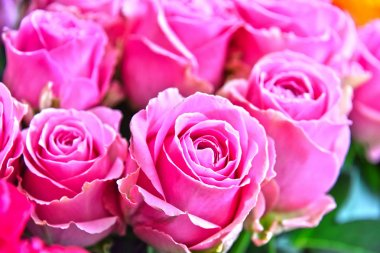 Roses in flower shop.