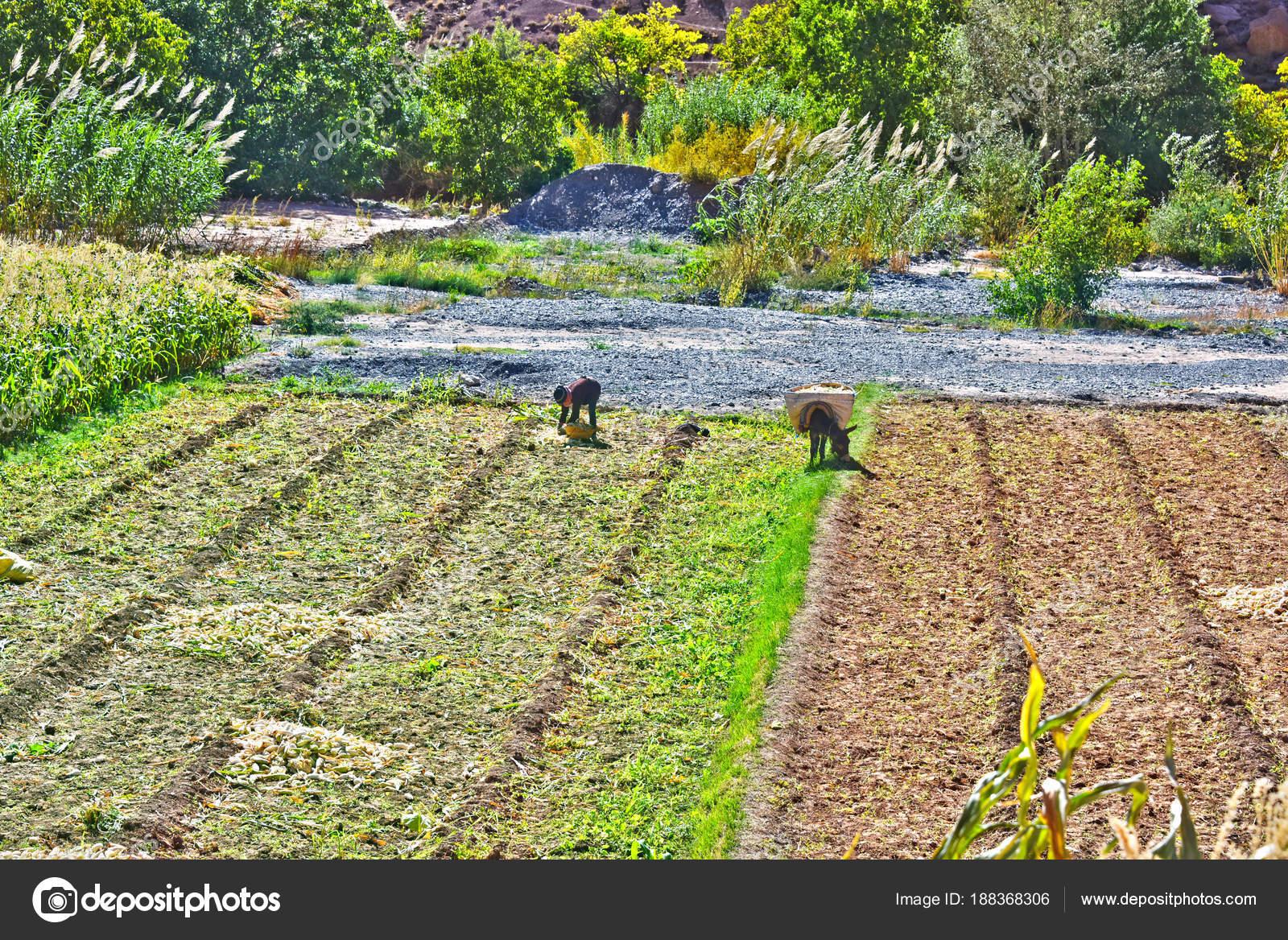 Self-sufficient labor-intensive farming in Morocco — Stock