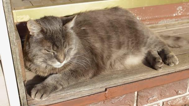Eine süße dicke graue Katze mit großen gelben Augen sitzt und sonnt sich in der Sonne. Lieblingstier des Familienkonzepts Welttierschutztag