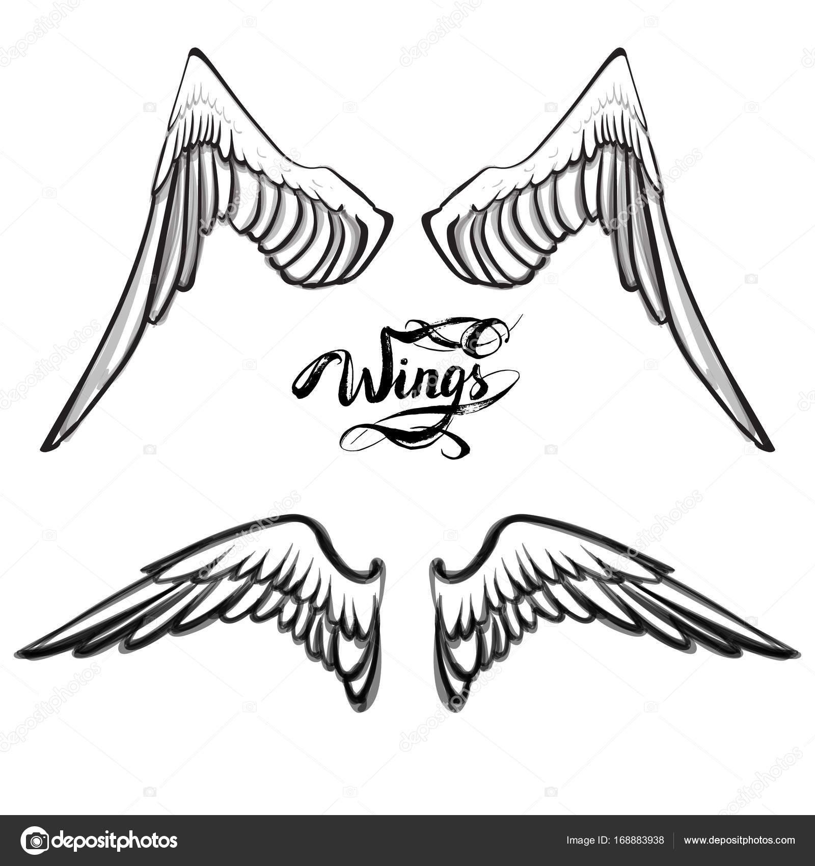 Ali Angelo Vettore Lettering Disegno Vettoriali Stock Tanshy