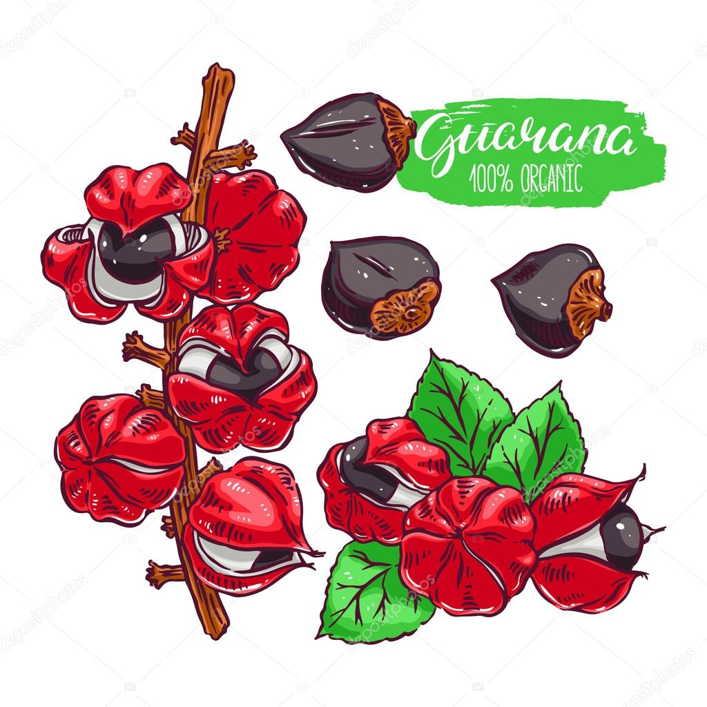 set of colorful guarana