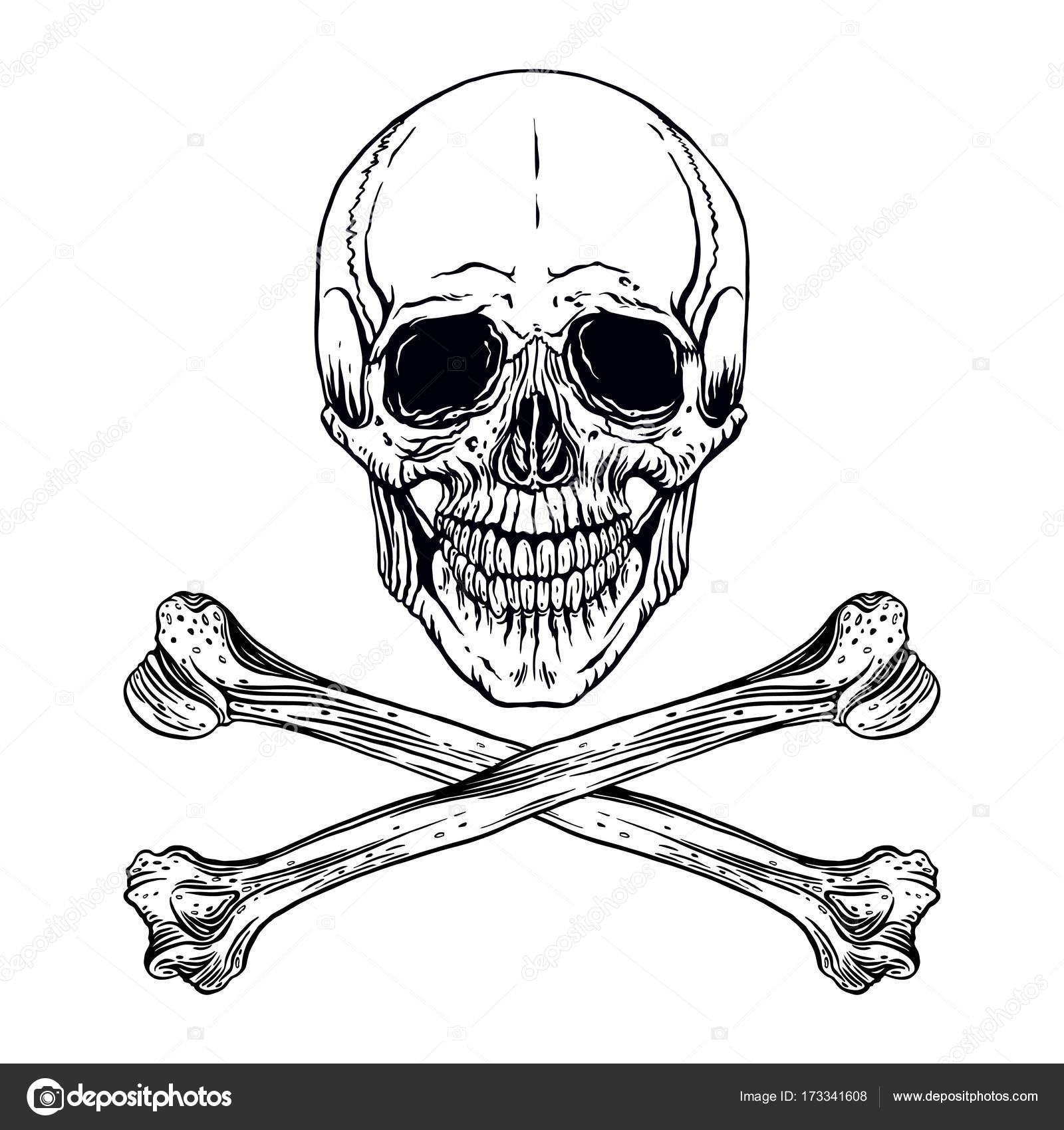 人間の骸骨 — ストックベクター ...