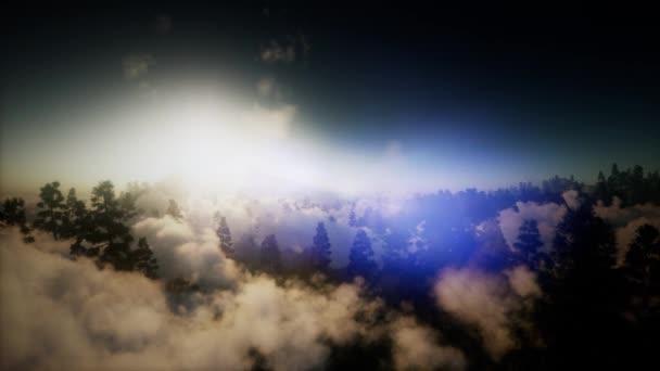 antény nad mraky v highland borového lesa