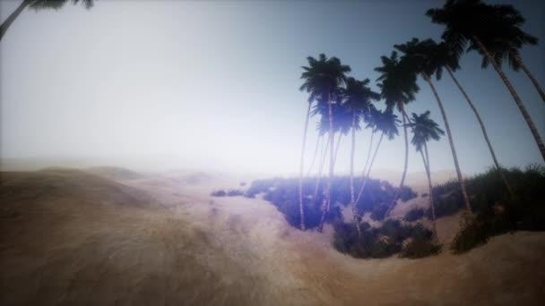písečná poušť s dlaní při západu slunce