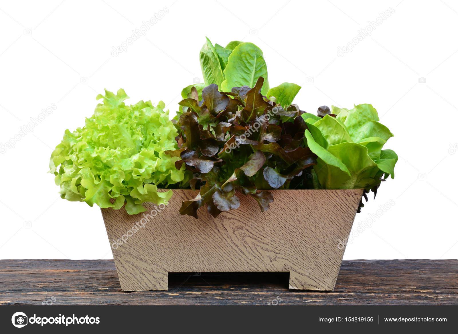 Warzywa W Doniczce Na Stół Z Drewna Zdrowa żywność Bio