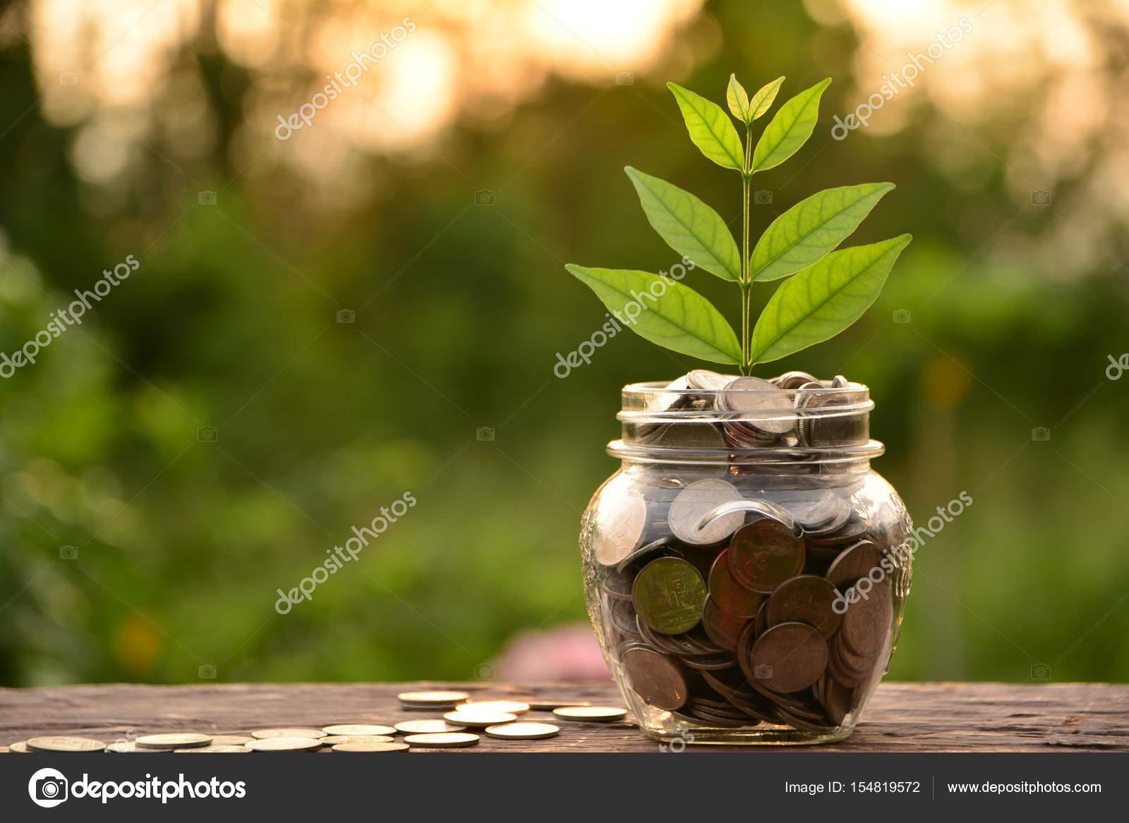 Fußboden Mit Münzen ~ Münze im glas befindet sich auf einem hölzernen fußboden und baum