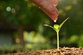 Sazenice koncept lidskou rukou zalévání mladý strom