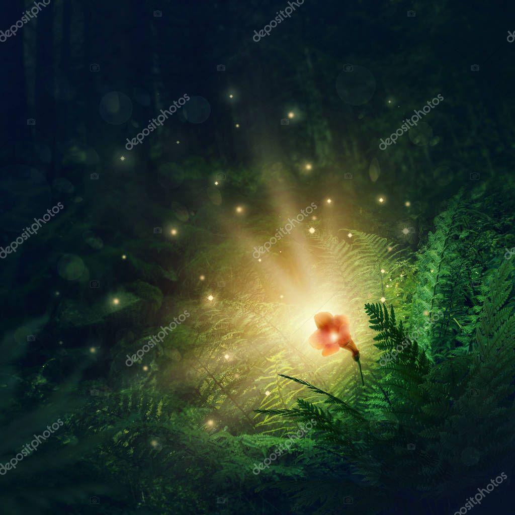 Фотообои Blooming fern flower