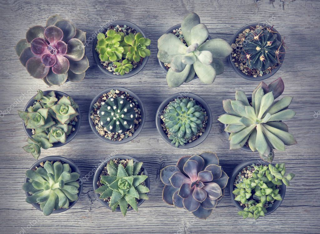 Different succulents on a wooden background
