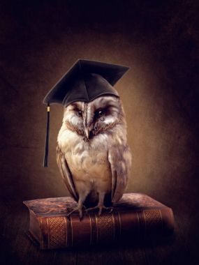 Wise owl on the book