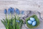 Fotografie Blue muscari flowers