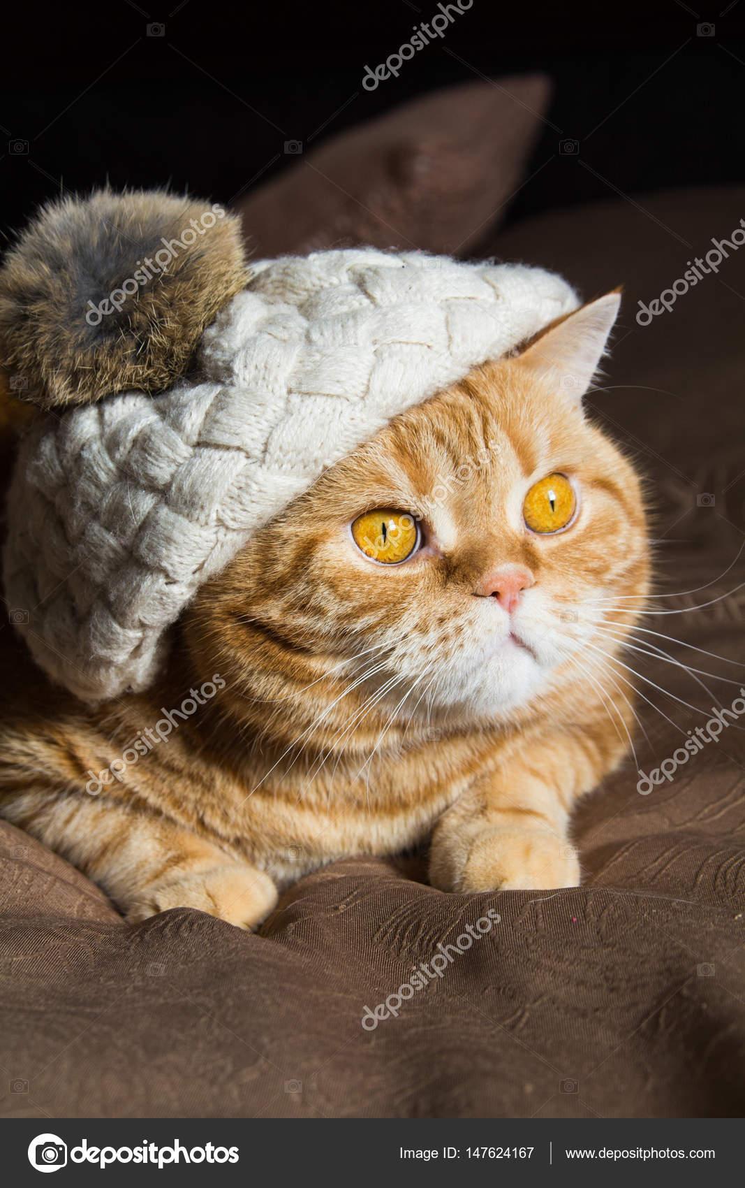 Красная кошка лежит в шляпе с помпоном — Стоковое фото ...