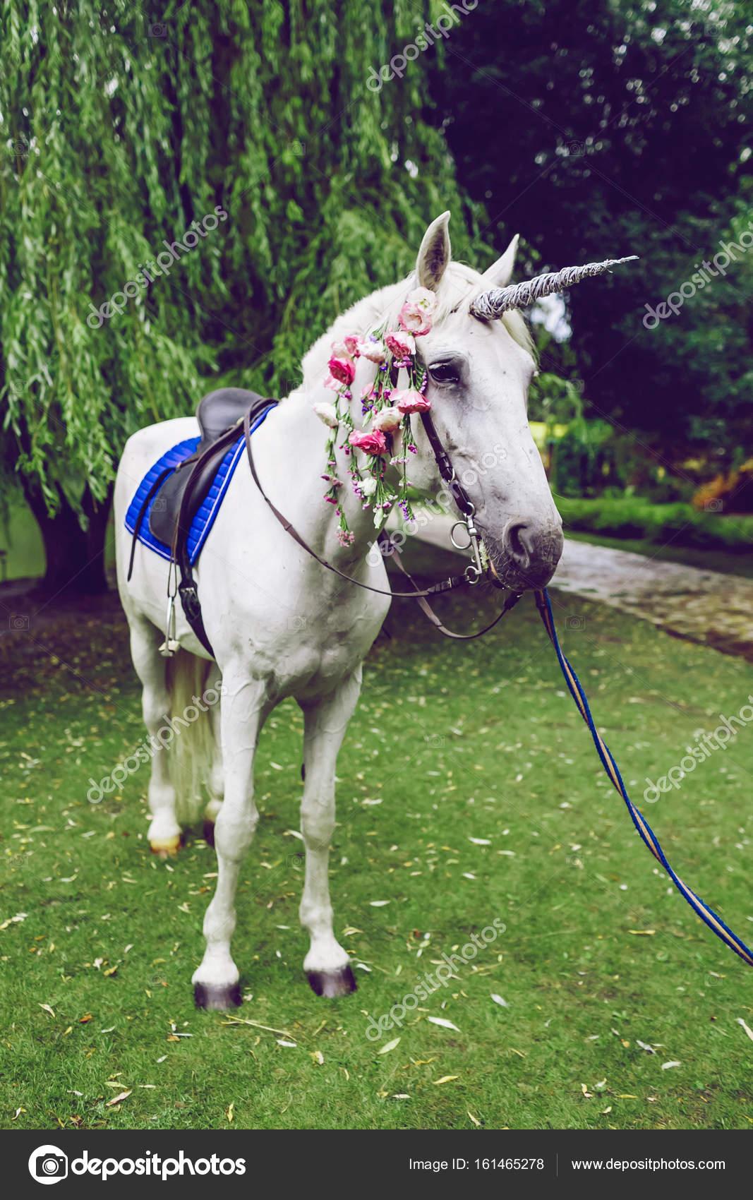 Pferd, gekleidet wie ein Einhorn mit dem Horn. Ideen für Foto ...