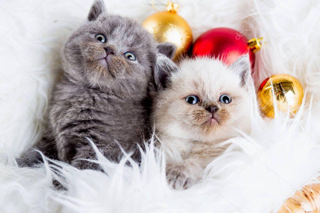 Новогодние Котята Обои На Рабочий Стол