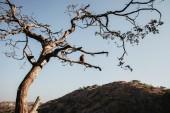 Osamělý opice sedící na větvi stromu